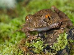 87 loài mới được phát hiện tại Việt Nam