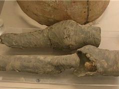 Tìm thấy đôi chân thất lạc của nữ hoàng Ai Cập 3.000 năm tuổi
