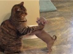 10 bức ảnh mèo nổi tiếng trên Twitter năm 2016