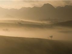 Ngắm vẻ đẹp nắng sớm dát vàng trên cao nguyên Mộc Châu