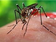 Những nguyên nhân khiến bạn bị muỗi đốt nhiều hơn người khác