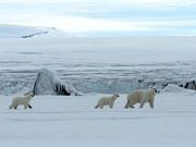 2016 là năm nóng nhất trong lịch sử của Bắc Cực