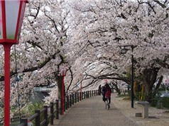 Những bí quyết du lịch bụi, tiết kiệm tiền ở Nhật Bản