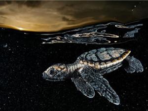 15 tác phẩm nhiếp ảnh dưới nước đẹp nhất 2016