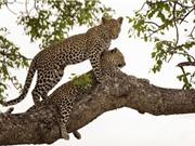Những khoảnh khắc cực ấn tượng của động vật hoang dã
