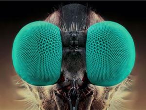 Những hình ảnh đáng sợ của các loại côn trùng