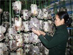 Bắc Giang: Thêm hai sản phẩm được bảo hộ nhãn hiệu