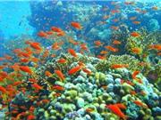 Cuộc đại tuyệt chủng sẽ bắt đầu từ sinh vật biển