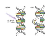 Dùng đột biến gene trị đột biến gây bệnh