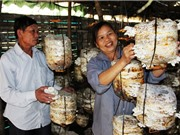 Hà Tĩnh nhân rộng mô hình sản xuất nấm