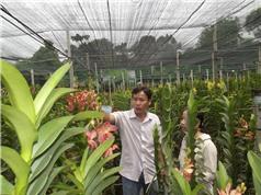 Đồng Nai thử nghiệm trồng lan quý