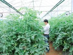 Sơn La thúc đẩy phát triển doanh nghiệp KH&CN