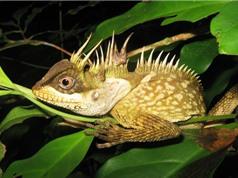 Điểm danh những loài động vật mới tìm được ở Đông Nam Á