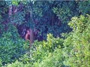 Bộ lạc sống nguyên thủy ở rừng Amazon mới được phát hiện