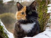 """Ngắm chú """"mèo 2 mặt"""" hot nhất mạng xã hội"""