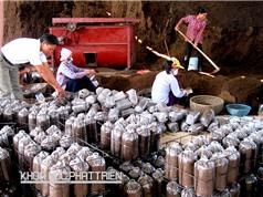 Nông dân thành triệu phú nhờ trồng nấm công nghệ cao