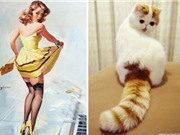 """""""Phì cười"""" với chùm ảnh mèo cưng tạo dáng như siêu mẫu"""