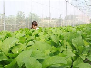 Bắc Giang: Hỗ trợ 500 triệu đồng cho mô hình nông nghiệp công nghệ cao