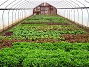 Lào Cai: Nâng cao năng suất trong nông nghiệp nhờ ứng dụng công nghệ cao