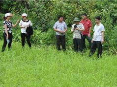 Hồi sinh giống lúa quý nhờ công nghệ sinh học