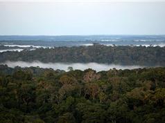 Rừng Amazon với Cách mạng công nghiệp 4.0: Thiên nhiên - nơi cất giữ chìa khóa của đổi mới sáng tạo