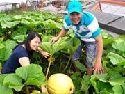 Thiên đường cây trái trên nóc nhà của anh đầu bếp Việt