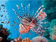10 loài cá có bề ngoài kì dị nhất hành tinh