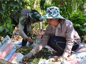 Đồng Nai: Áp dụng tiến bộ kỹ thuật để nâng cao thu nhập cho nông dân