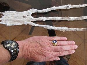 Phát hiện bàn tay siêu dài giống người ngoài hành tinh ở Peru