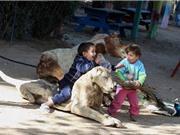 """""""Rùng mình"""" trước cảnh lấy xác thú khô làm đồ chơi ở Gaza"""