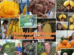 Những kỷ lục thế giới đáng nể của rau củ quả