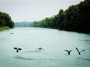 Khám phá 5 sân chim đặc sắc ở miền Tây