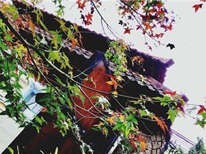 6 vùng lá phong tuyệt đẹp nhất Việt Nam
