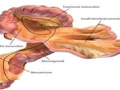 Những bộ phận ít được biết đến nhất trong cơ thể người