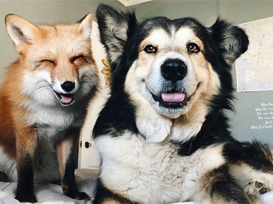 Khoảnh khắc tuyệt vời của chó và cáo đỏ