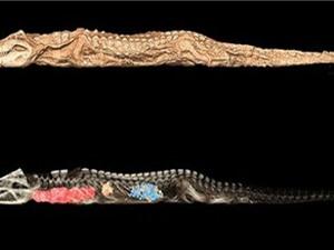 Phát hiện cá sấu không đầu trong mộ cổ Ai Cập