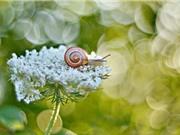 Chùm ảnh ấn tượng về loài ốc sên