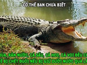 ĐỘC-LẠ: Đà điểu gầm như sư tử, cá sấu có thể bị chết đuối