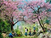 Những địa điểm ngắm hoa mùa Xuân đẹp nhất Việt Nam