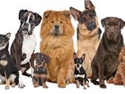 Những sự thật thú vị và kỳ lạ về loài chó