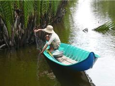 Clip: Giăng lưới bắt cá sặc trong rừng U Minh
