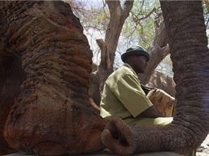 Người đàn ông ngủ cùng 60 con voi mồ côi