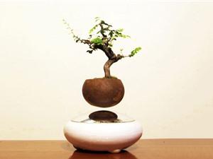 """Clip: """"Siêu phẩm"""" bonsai mini bay như chim giữa Hà Nội"""