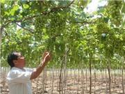 Ninh Thuận: Chú trọng ứng dụng công nghệ cao vào nông nghiệp trong năm 2017