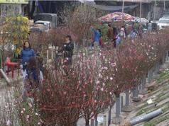 Chùm ảnh hoa đào khoe sắc ở chợ hoa Tết nổi tiếng nhất Hà Nội
