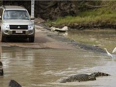 Bị cá sấu cắn chết vì cố lội qua sông dữ