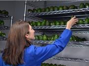 Lớp phủ giúp hoa quả có hạn sử dụng lâu gấp 5 lần