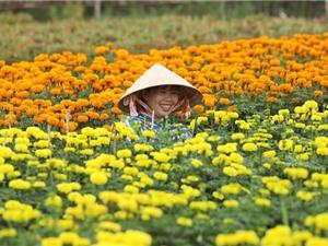 Chiêm ngưỡng làng hoa Sa Đéc rực rỡ ngày Xuân