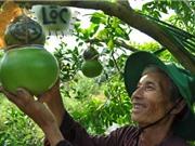Kỹ thuật trồng đào tiên hồ lô Tài Lộc cho thu nhập trăm triệu
