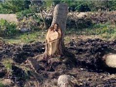 Khúc cây hình Chúa Jesus được người dân Argentina tôn thờ